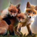 Cosa significa sognare gli animali
