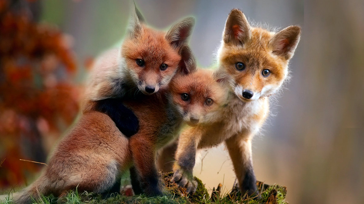Sognando animali selvatici