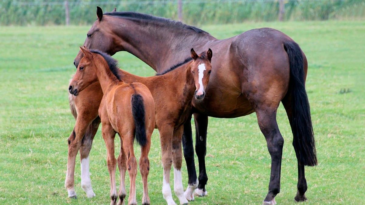 Sognando un cavallo da allevamento