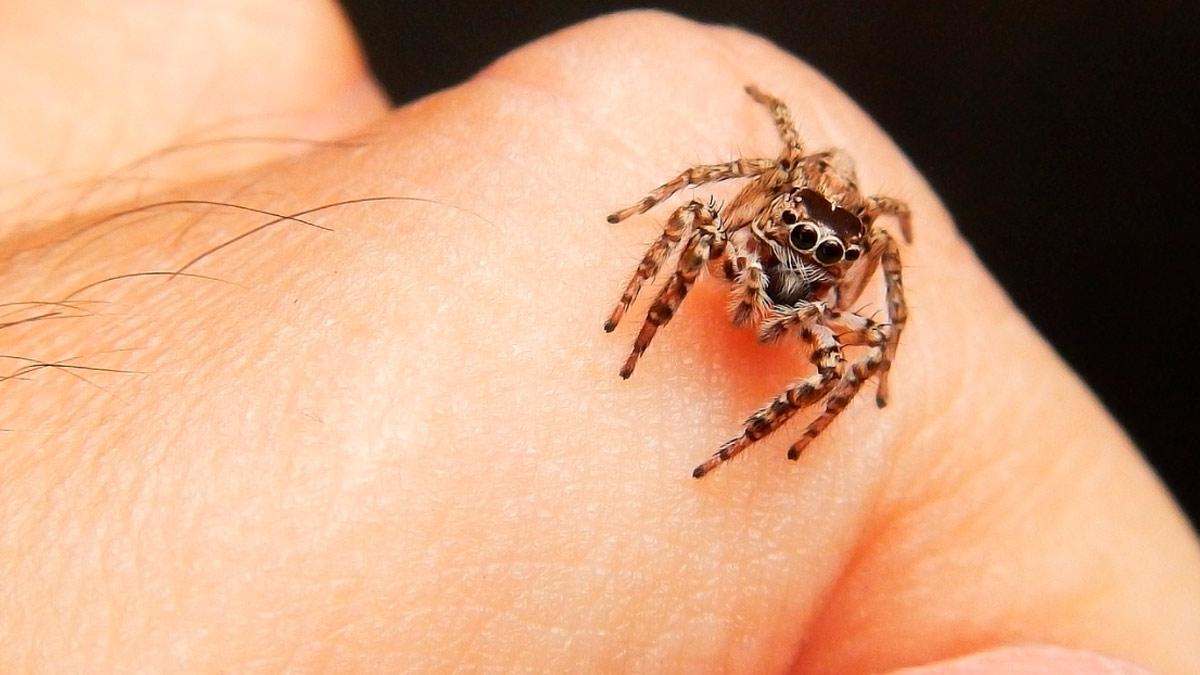 Sognando un ragno in mano