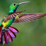 sognare colibrì