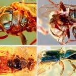Cosa significa il sogno degli insetti