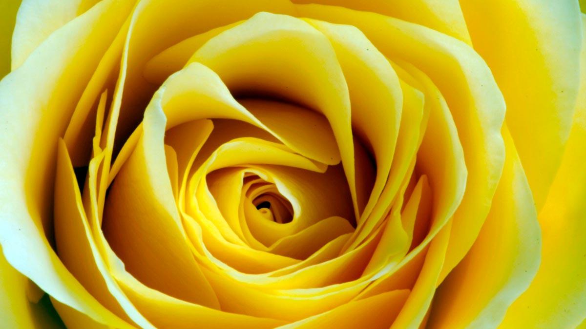 sognare con il giallo