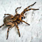 sognare i ragni