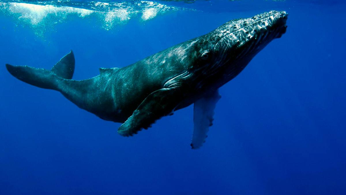sognare una balena