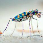 Cosa significa sognare gli insetti