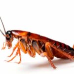 Cosa significa sognare gli scarafaggi