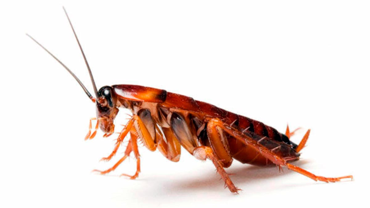 sognare gli scarafaggi