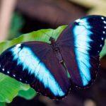 sognare le farfalle