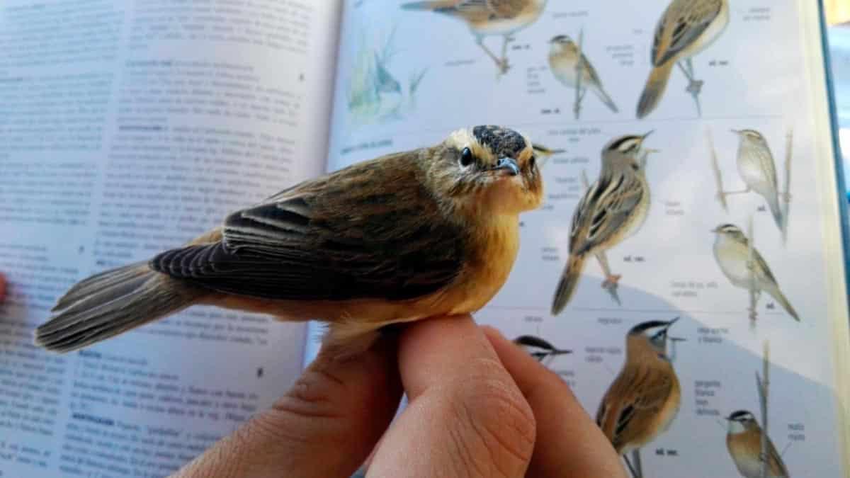 sognare gli uccelli