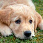 sognare i cani