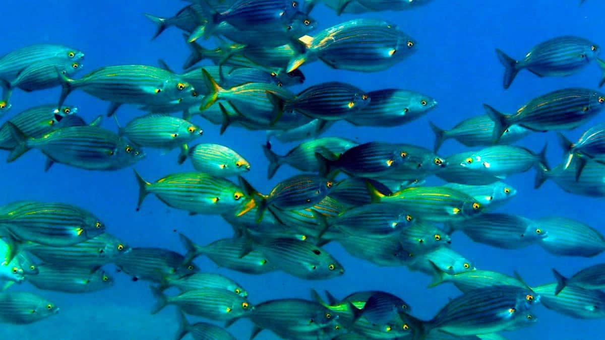 sognare il pesce