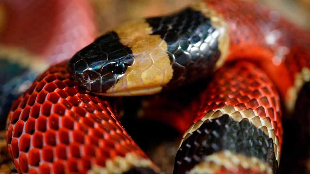 sognare il serpente