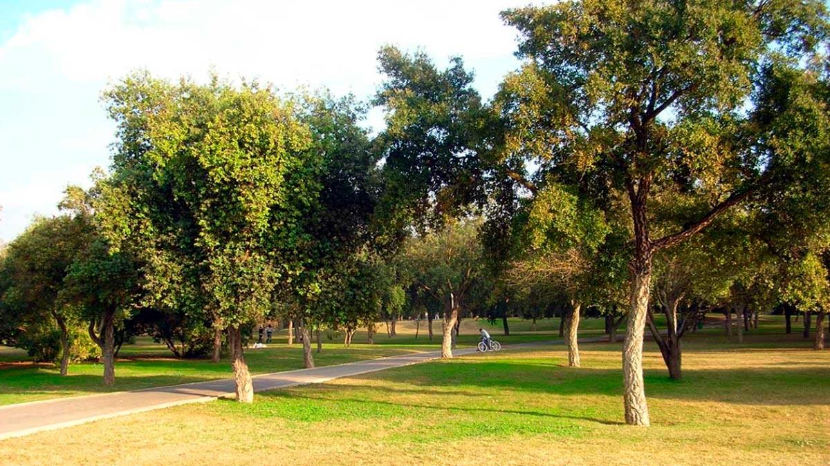 sognare un parco
