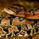 Cosa significa sognare un serpente